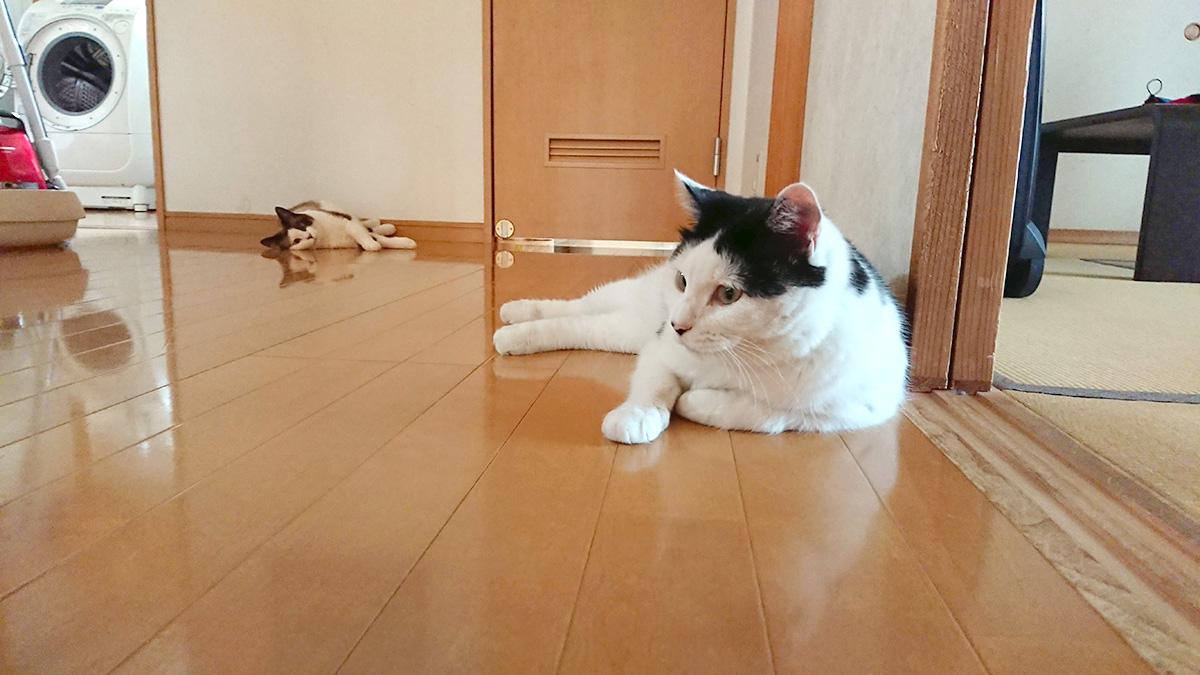 夏場の暑い室内は要注意!猫さんを熱中症から守るための注意と対策とは?