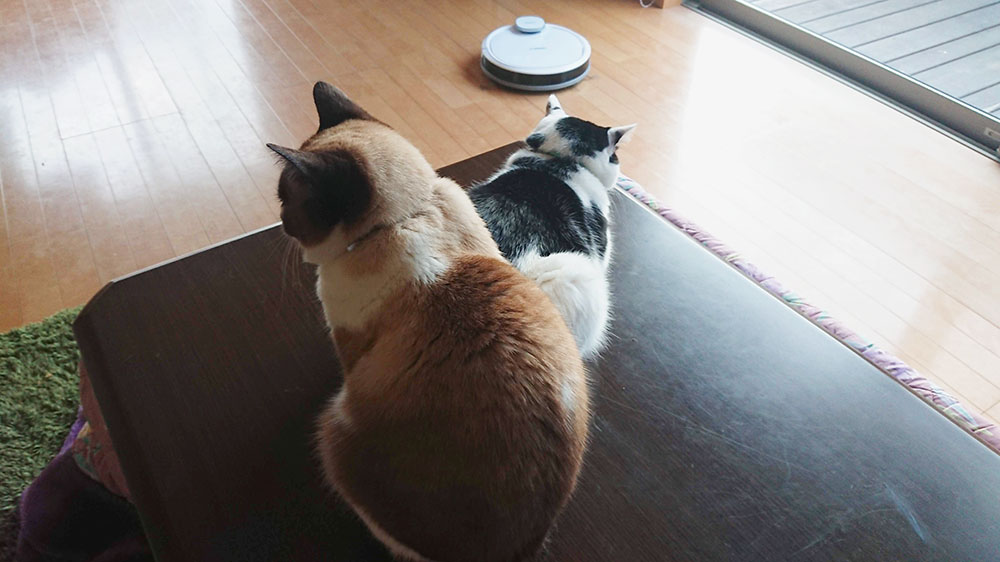 猫さんとロボット掃除機