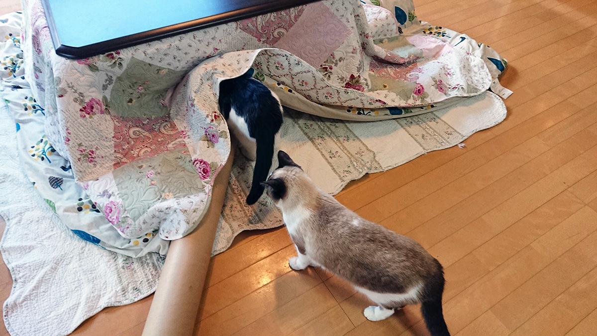 やっぱり猫さんたちにとってこたつは天国