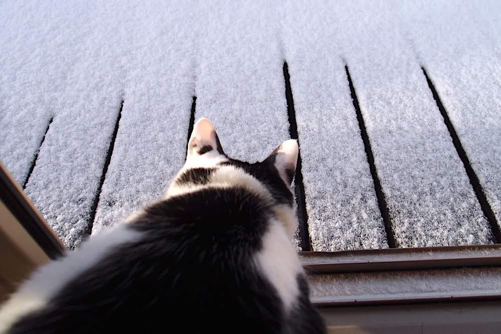 雪を見るこてつ|それいけ猫さん