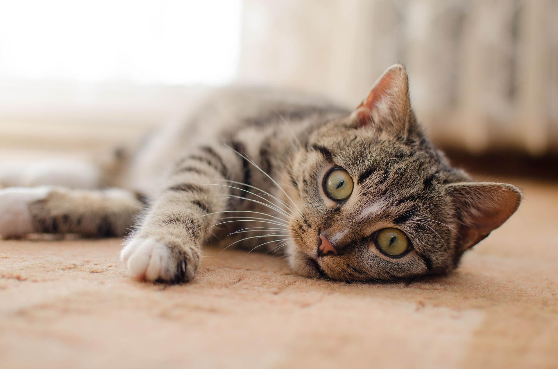猫さんの怪我や病気に備えよう!ペット保険のススメ
