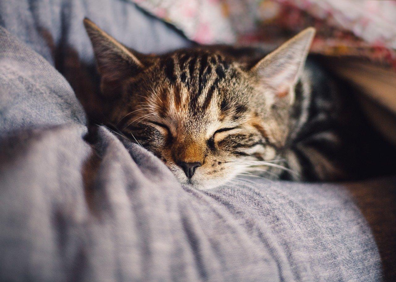 新型コロナウイルスは猫さんにも感染するの?
