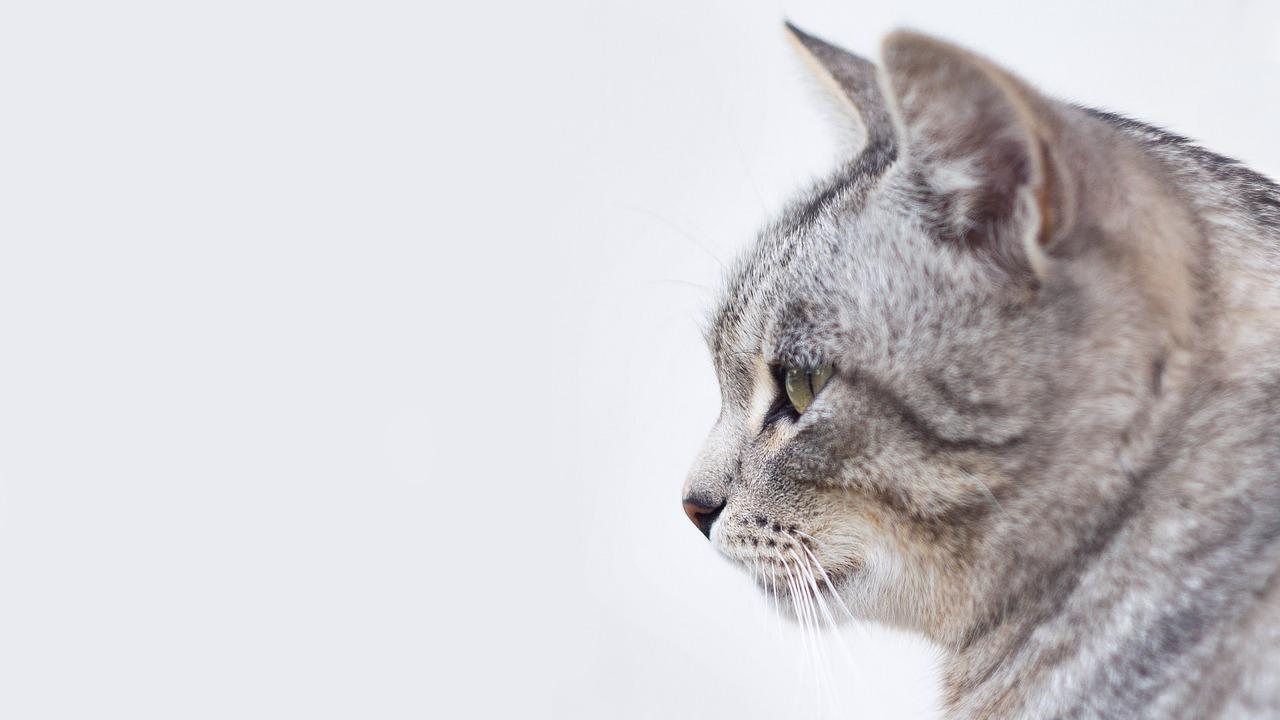 ステイホーム中の飼い主が猫さんたちのストレス源に…
